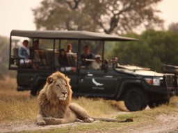 Safari opportunities for breathtaking wild life experiences