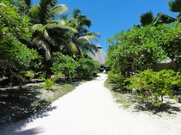 Wonderful vegetation - The island has a beautiful vegetation and will be maintained daily.