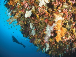 Diving and underwater adventures - Explore the amazing and colorful underwater world at the most diverse spots.
