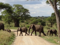 Tarangire Nationalpark - Stunning encounters with a variety of different animal species will inspire you.