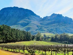Stellenbosch - Explore many different wines from this region.