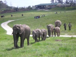 Knysna Elephant Park - Get in close contact with these friendly big animals.