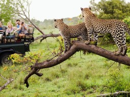 &Beyond Privat Safari - Discover the breathtaking wildlife