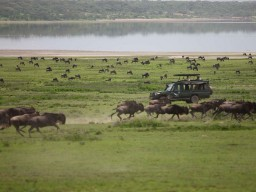 &Beyond Privat Safari - Varied meetings with lots of different animals