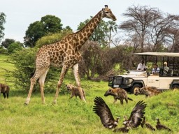 &Beyond Privat Safari - Wildlife from it's best side