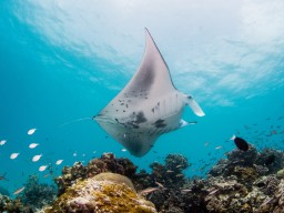 Intercontinental Maamunagau - Under water world - Discover the under water world of this beautiful biodiversity.