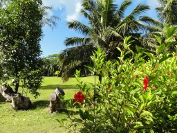 Tropical vegetation - Hike around in nature and discover the vibrant bird and plant life of the island.