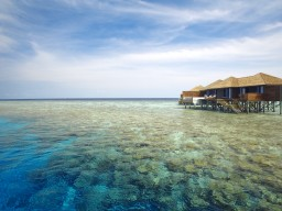 Top house reef - The reef around the island offers the best diving and snorkelling opportunities with perfect conditions.