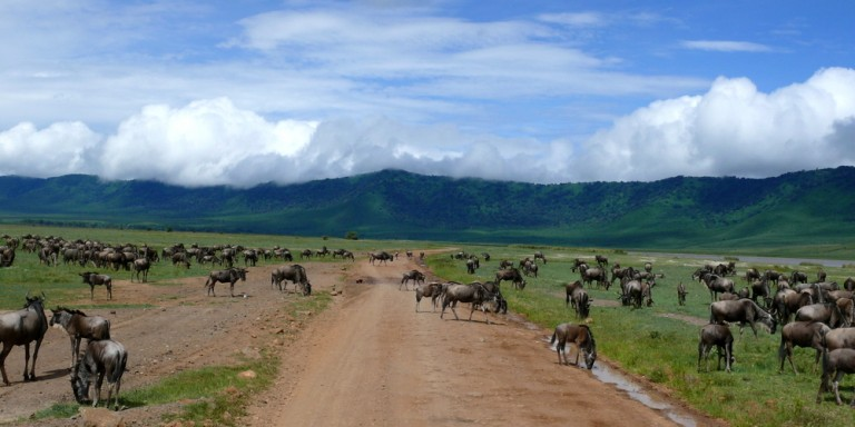Ngorongoro crater - Discover the Ngorongoro Crater with its incredible variety of animals.
