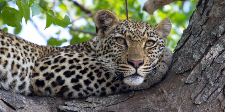 Game Drives - Discover the most spectacular animals